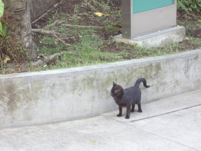 A black cat - always around! I don't see them as bad luck!