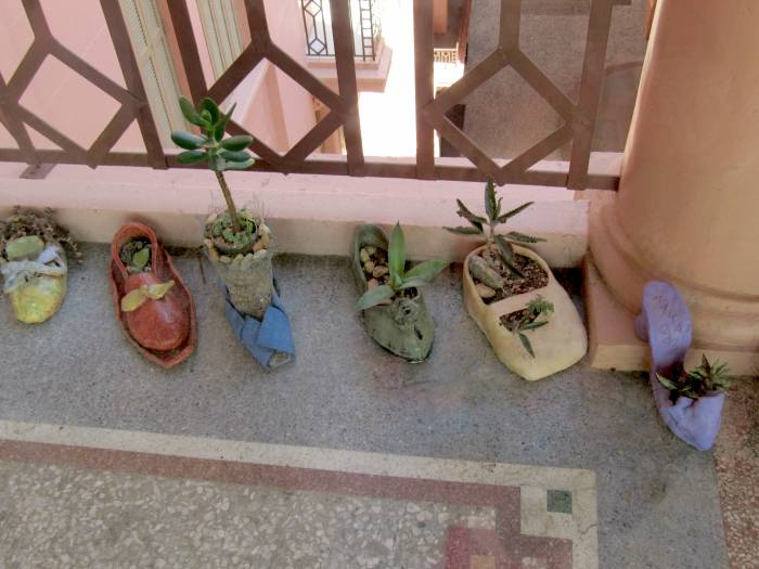 Shoe-gardening exhibition :)