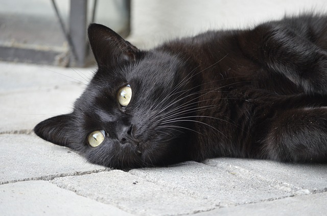 Believe me, black cats are nice!