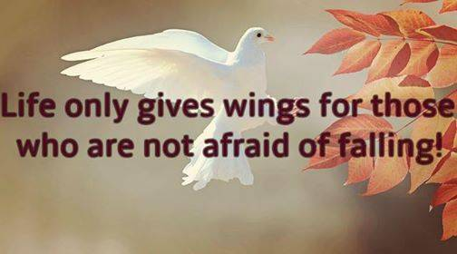 Life-and-wings-quote